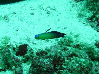Maldives5f7.jpg