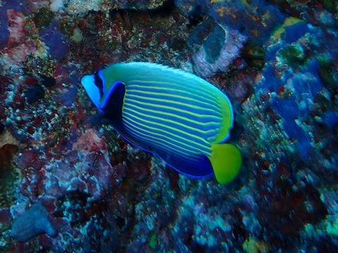 maldives739