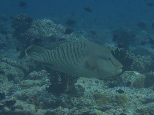maldives6b8.jpg