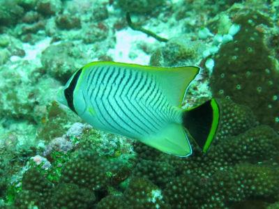 Maldives5f8.jpg