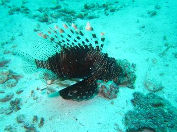 maldives359.jpg