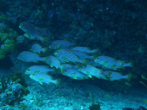 maldives6b4.jpg