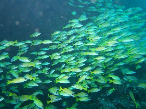 maldives691.jpg