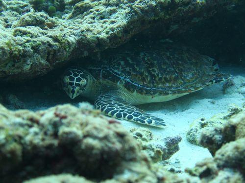 maldives672.jpg