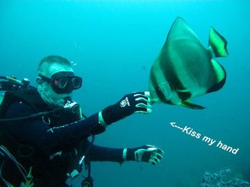 Adrian Friendly Batfish 2 sm-m800
