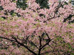 04-P2280014●桜-m640-sf-JIDO