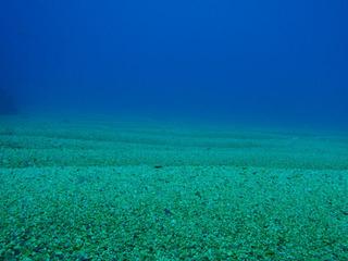 P1020007●深度55mの世界-640-480