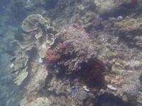 PC300381●珊瑚 2012_12_30-m800