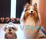 リズちゃんとサラちゃん