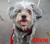 Dixieのバラ色の微笑み