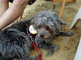 砂浜バーの砂は気持ち良いよ