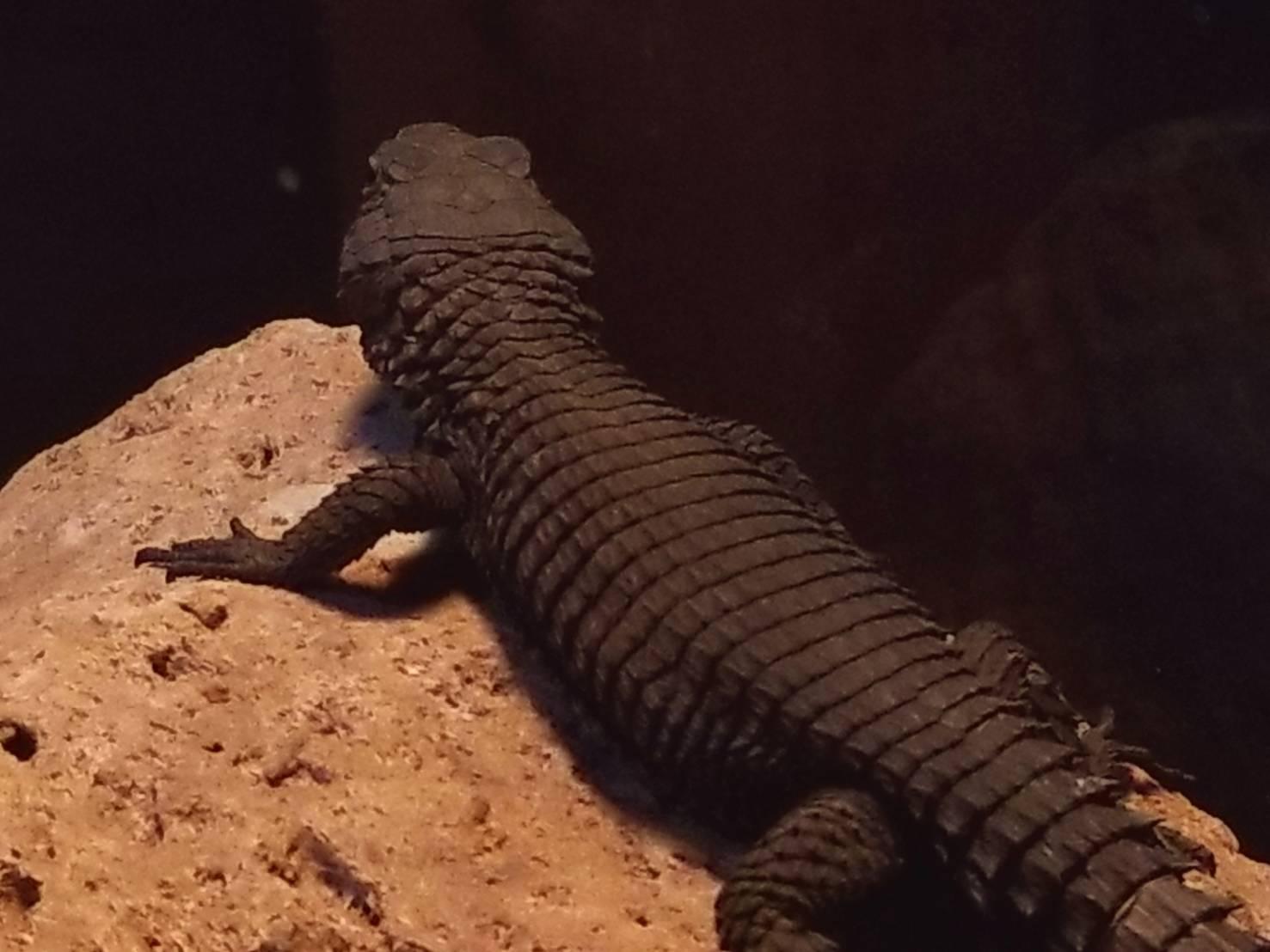 スチュペンデミス : 爬虫類専門...