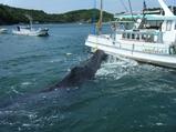 クジラ暴れる