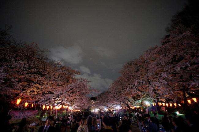 桜舞い散る夜風とか