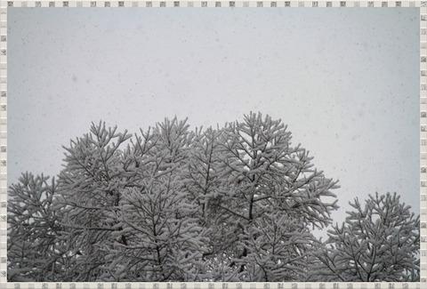 1-IMG_5621