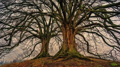 tree-3097419_1920