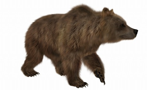 brown-bear-4248371_1920
