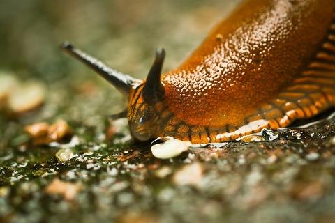 snail-1422180_1920