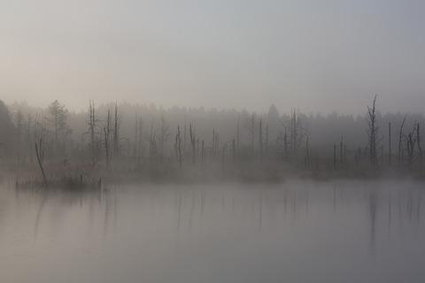 fog-1886939_640