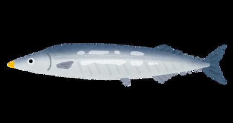 fish_sakana_sanma