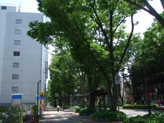 前橋駅前けやき並木