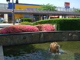 前橋駅北口の噴水付近のツツジ