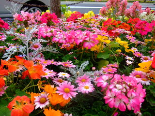歩道の花�