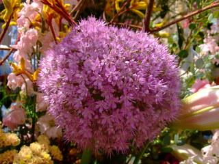 紫のこの花の名前は何だろう?