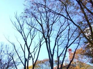 前橋駅前・並木道�