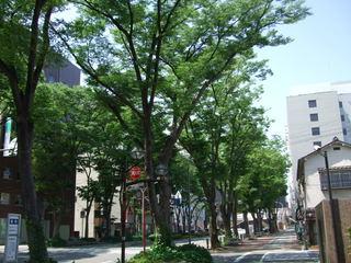 JR前橋駅前・ケヤキ並木