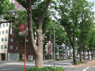 JR前橋駅前並木道?
