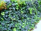 GREEN WALK �