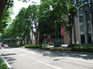 前橋駅前けやき並木�