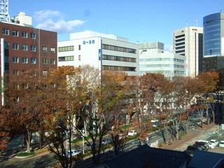 前橋駅前・並木道