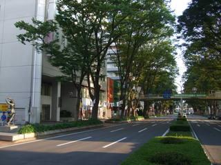 JR前橋駅前並木道