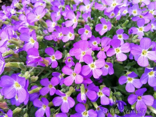 PhotoGrid_1589180726582