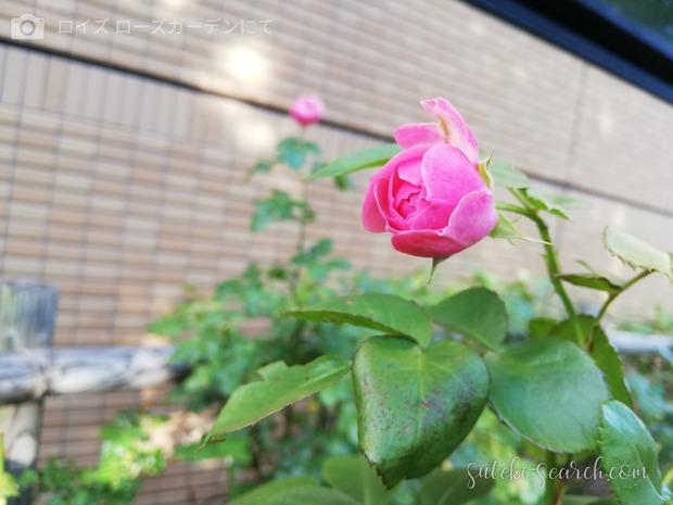 Photo_1565759850277