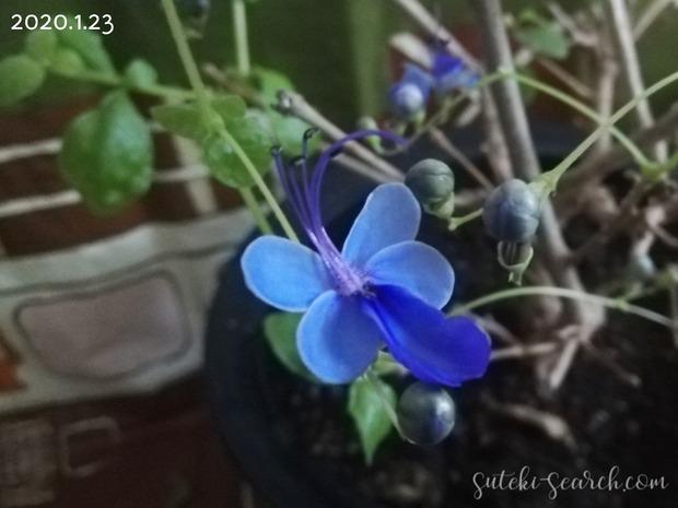 Photo_1612688307980