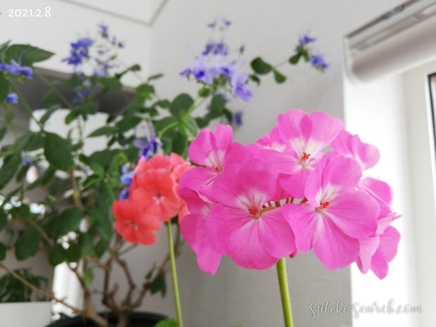 Photo_1612776023521