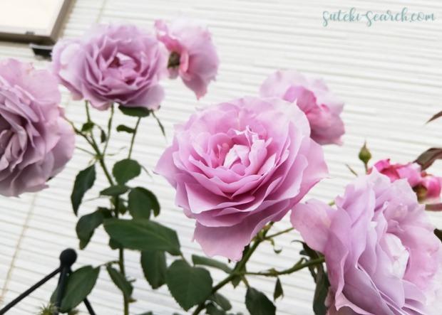 Photo_1573703490726