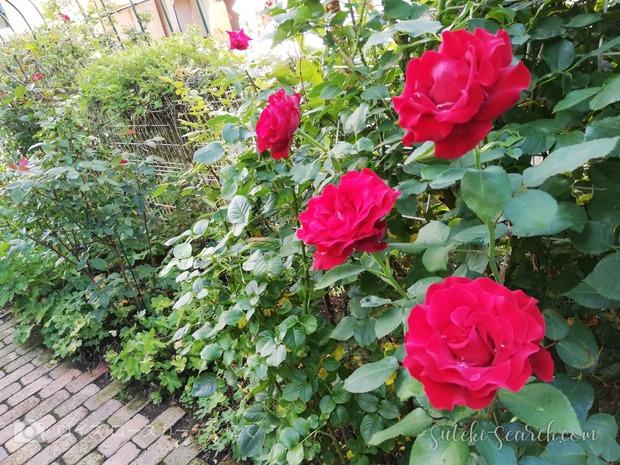 Photo_1565759853580