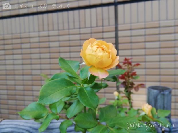 Photo_1565759697445