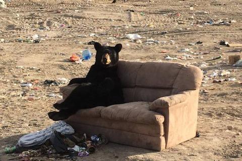 Relaxed Bear OCT012017 01