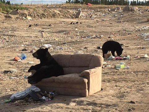 Relaxed Bear OCT012017 02