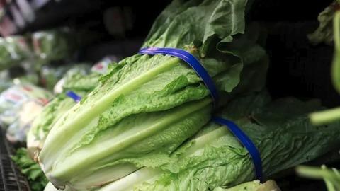 lettuce NOV242018 01