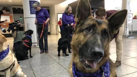 DOG NOV162018 02