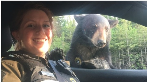 bear JUL072018 01