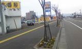 長岡の歩道