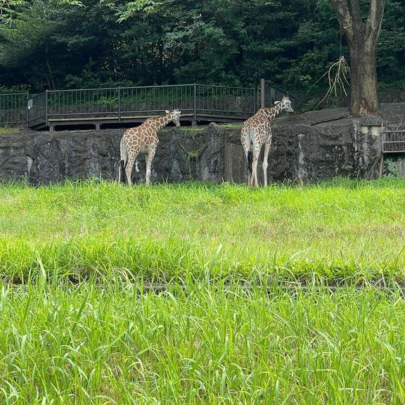 中日外国人助っ人達、仲良く東山動植物園に行く