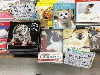 POP 紀伊國屋書店新宿本店7F-2